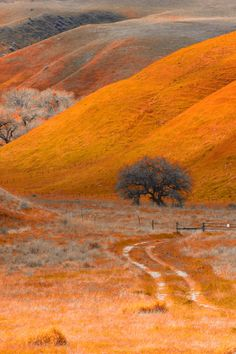 When the road to nowhere collides with orange.