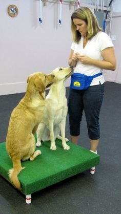 Lisa Sipe is pictured with her two dogs, Sundance and Jai. She provided the DIY Dog Treat recipe below.