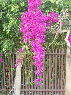 Flowers in my garden!