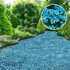 Die 139 Besten Bilder Von Pflanzen Garden Plants Florals Und