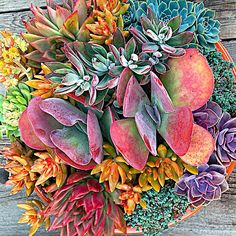 #succulent bounty! Make your own composition or let us create a bowl of beauty for you