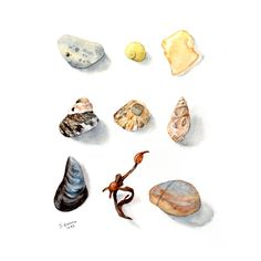 watercolor artifacts illustrations - Google Search