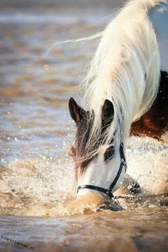 .Meet more horse lovers,equestrian singles ,cowgirls or cowboys at the site www.horsesingles.net.