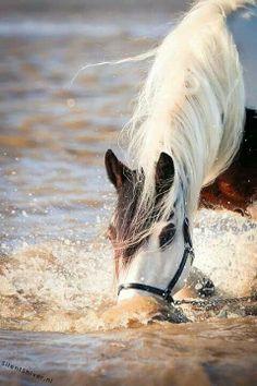 #horses