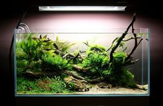 Shallow Brook par Spin0ff.     Something about this aquascape makes me happy. Can't put my finger on it...