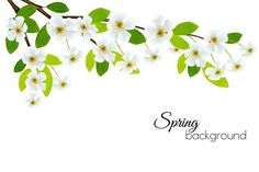 Spring background with white flowers. Illustrations