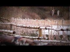 Aubinger Lohe - YouTube