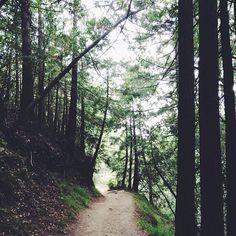 Path in the woods | @designconundrum
