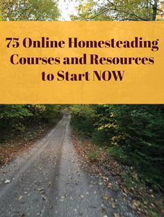 Check out this big list of free or cheap online homesteading courses and resources to start now! #livingoffthegrid #homesteadingforbeginners #offthegrid #selfsufficient #selfreliant #DIY #anoffgridlife #onlinehomesteading courses #homesteadingresources #offgrid101 #offgridbasics #offgrid #countrylife #homesteadingforwomen