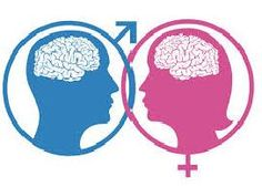 female and male brain     http://whatisthewik.com/difference_between/male-female-brains/