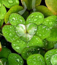 Coolest And Romantic Nature - Pics