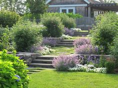 Three sets of steps of solid stone pavers descend gently through terraced beds. To soften the formality, plants include loose shrubs—white Hibiscus syriacus 'Diana' and blue Vitex agnus-castus—and meadow flowers such as Echinacea, Nepeta, Kalimeris, and Phlox paniculata 'David.'