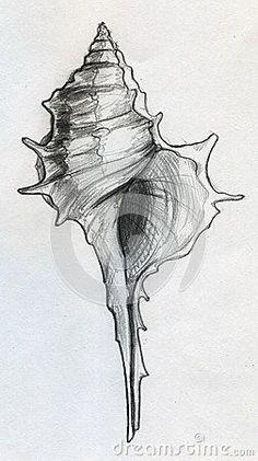 Sea shell sketch