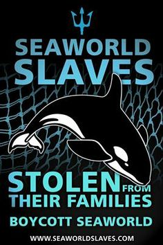 Say NO to Sea World in Dubai!!! No!!! What Would Captive Orcas Tell Us If They Could Talk? Empty the tanks!! Sick, horrific drilling of their teeth! Inbreeding. Oppressively small tanks. Inhumane separation of family members. Premature deaths. Orca. Killer whale. Captivity kills. Boycott marine parks. Get the facts. Protect our majestic oceans and sea life! Sustainable world!