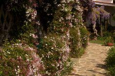Quinta do Barranco da Estrada, Santa-Clara-a-Velha, Alentejo, Portugal