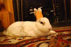 kira's bunny at christmas 2012!