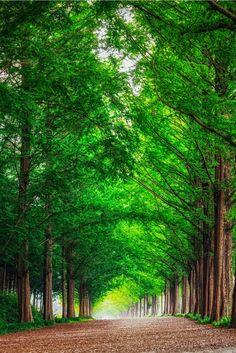 disminucion:  Metasequoia Road, Aaron Choi | Website