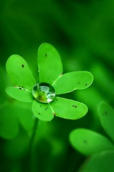 Verde-leaves and water World Of Color, Color Of Life, Go Green, Green Colors, Colours, Dew Drops, Rain Drops, Water Droplets, All Nature