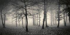so peaceful, foggy grey