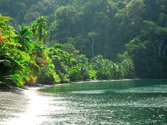 Playa Nicuesa Rainforest Lodge Peninsula de Osa Set on a private part of Nicuesa Beach, Playa Nicuesa Rainforest Lodge has a tropical setting in the Golfo Dulce region. It offers rooms with balconies and rainforest views, as well as a range of outdoor activities.
