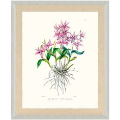 Bateman Orchid Ix Print From The New York Botanical Garden Archives ($399) ❤ liked on Polyvore featuring home, home decor, wall art, framed wall art, new york home decor, new york wall art, frontgate wall art and garden home decor