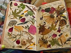wreck this journal wtj - press leaves and other found things (turned it into like a potion magic type page) Kunstjournal Inspiration, Art Journal Inspiration, Journal Ideas, Wreck This Journal, Pressed Leaves, Pressed Flower Art, Practical Magic, Nature Journal, Book Of Shadows