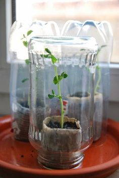 Upcycling: Mini-Gewächshaus aus Altglas und Zeitungspapier / Miniature greenhouse made from old glassware and newspaper