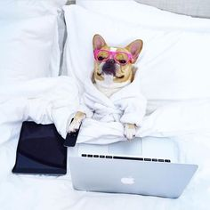 Work from bed 🐶  .  .  @chloetheminifrenchie can Netflix *and* chill now that she gets WiFi in bed with eero. Check out her post for free shipping and other pup adventures.  .  #wifi #home #internet #tech #netflixandchill #workfrombed #lazy #chill #homesweethome #dogsofinstagram #chloetheminifrenchie #woof