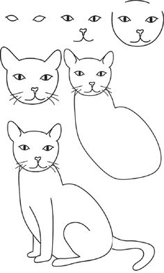 how to draw a cat, a cat draw drawing stages