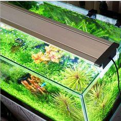 Devoted 1w 6 Colors Waterproof Led Light Multi Color Fish Tank Lamp Submersible Mini Aquarium Lights Bubble Aeration Disc Lighting Yet Not Vulgar Lights & Lighting