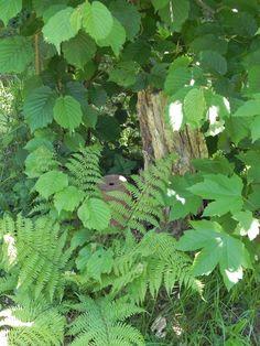 ein baum lebt erst, wenn er stirbt Garden, Plants, Trees, Garten, Gardening, Plant, Outdoor, Gardens, Yard