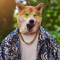 The 14 Most Fashionable Shiba Inu You Ever Seen Shiba Inu, Akita, Menswear Dog, Funny Animals, Cute Animals, Dog Presents, Dog Suit, Leg Day, Dog Wear