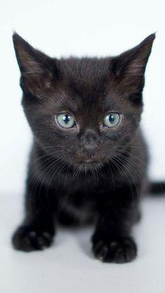 Black cat :3
