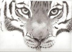 Fonds d'écran Art - Crayon > Fonds d'écran Animaux - Tigres tigre par bibi34 - Hebus.com