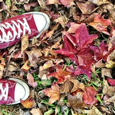 踩了一地紅毯子,桃園虎頭山