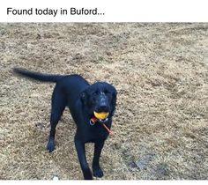 Found Dog - Mix - Buford, GA, United States 30519 on February 23, 2016 (16:15 PM)