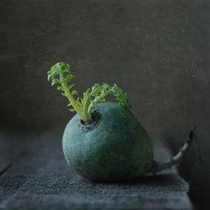 #still #life #photography • photo: время | photographer: Наташа Андреева | WWW.PHOTODOM.COM