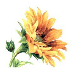 Joy Design Studio: Flower Painting_By Lisa item) Watercolor Sunflower, Sunflower Art, Watercolor Flowers, Painting Flowers, Watercolor Illustration, Watercolour Painting, Plant Drawing, Pencil Art Drawings, Decoupage