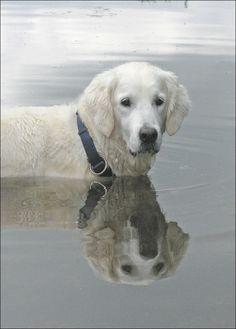 Reflexos na água.