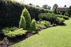 """""""Mums ir neliels dārziņš. Vēlos izveidot nelielu, līdz 1,20 m augstu dzīvžogu starp mūsu un kaimiņu dārzu. Vieta dzīvžoga stādīšanai ir apmēram"""