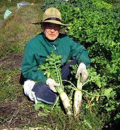 Daikon, il ravanello giapponese - Coltivare l'orto