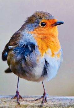 Small Birds, Little Birds, Colorful Birds, Most Beautiful Birds, Pretty Birds, Bird Pictures, Animal Pictures, Beautiful Creatures, Animals Beautiful