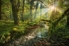 See a temporate rainforest in Washington or Oregon - in my future, I hope