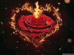 rosa de fuego World Gif, Gifs Lindos, John Johnson, Animated Heart, Romantic Song Lyrics, Good Morning Gif, My Little Pony, Birthday Candles, Fire