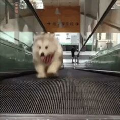 Here's Your Weekly Dose Of Cute! is part of Cute animals - Here's Your Weekly Dose Of Cute! World's largest collection of cat memes and other animals Funny Animal Pictures, Cute Funny Animals, Cute Baby Animals, Funny Dogs, Animals And Pets, Cute Puppies, Cute Dogs, Dogs And Puppies, Puppies Gif