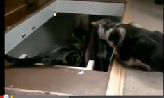 WATCH: Cats can be jerks!   Too funny! #cats #animals #funny