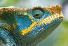 Art Wolfe - Chameleon in Madagascar by Tani07, via Flickr