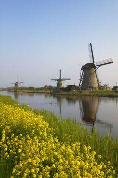 Windmills along the canal in Kinderdijk, Netherlands