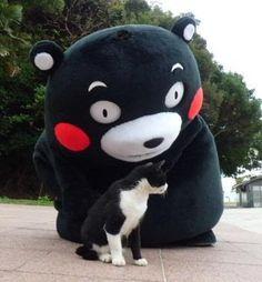 くまモンと猫
