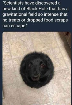 that's one cute black hole | TrendUso #Scientists #scientist #dog #dogs #blackhole #cute #adorable #pet #pets #animal #animals #black #funny #hilarious #humor #humorous #humour #meme #memes #memesdaily #lol #wtf #omg #rofl #haha #hahah